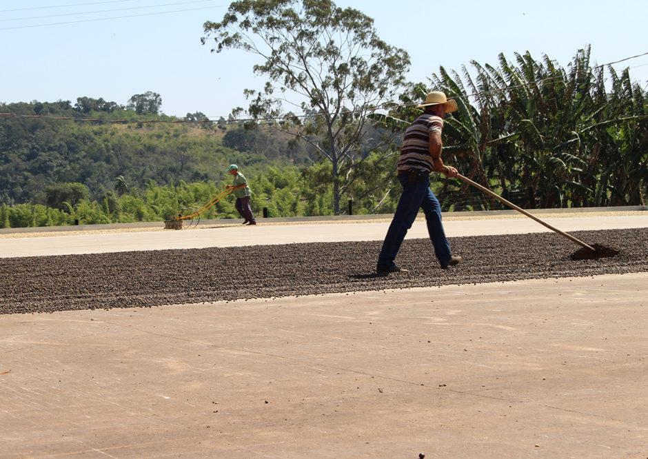 como-funciona-uma-fazenda-de-cafe-um-cafezinho-sitio-daniella-pelosini-pardinho-940x666