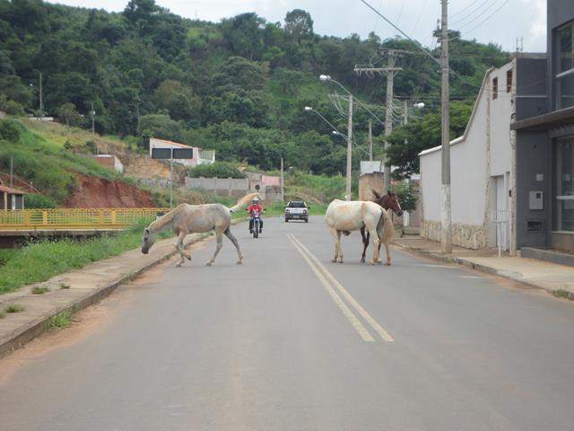 Cidade-Paisagem-Avenida-Ze-Lagoa-Cavalos-8.jpg-Copy