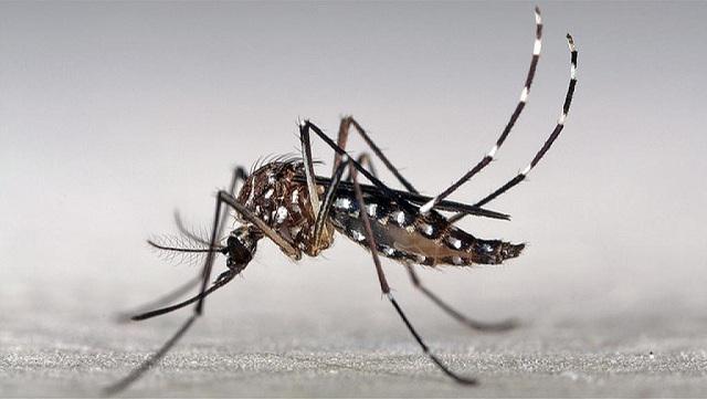 Saúde-Febre-Amarela-Aedes-aegypti